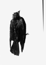 Alexandra Catiere - Crow (2014)